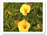 Birthday Ecard To Daughter Most Beautiful Flower